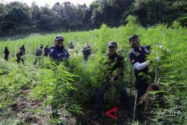 BNN provinsi Aceh musnahkan ladang ganja