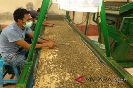 Distan: perlakuan khusus optimalkan potensi produksi kopi