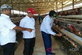 Aceh baru penuhi lima persen kebutuhan telur
