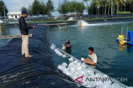 BPBAP Aceh Besar tebar sejuta bibit udang