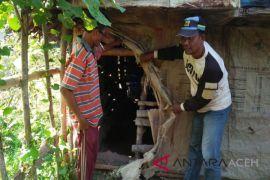 Aksi pencurian sapi marak di Aceh Utara