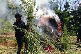 BNN musnahkan 70 ton ganja di Aceh Utara