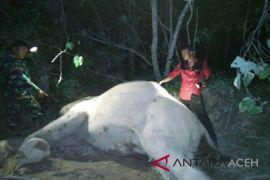 Gajah mati ditemukan di pedalaman Aceh Timur
