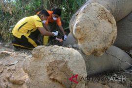 Olah TKP kematian gajah