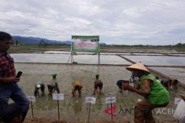 Petani Aceh Barat mulai tanam padi rendengan