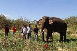 CRU Peusangan peringati Hari Gajah Sedunia