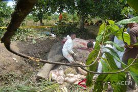 BKSDA lakukan nekropsi bangkai gajah