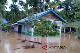 Petani Aceh Jaya gagal panen akibat banjir