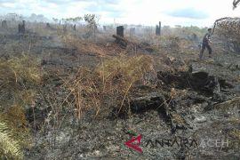 Lahan gambut di Aceh Barat terbakar