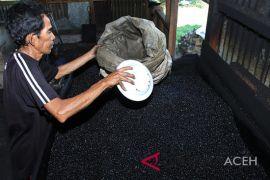Ekspor kopi Aceh lewat Medan, september nilainya turun