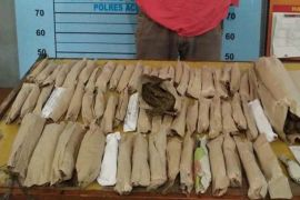 Polres Aceh Utara tangkap dua pengedar ganja