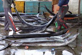 Ikan layang dominasi hasil tangkapan nelayan Lhokseumawe