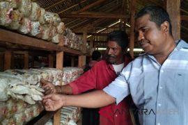 Pertamina bantu masyarakat budi daya jamur tiram