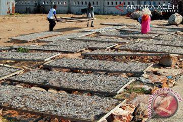 cuaca pengaruhi turunnya harga teri di Lhokseumawe