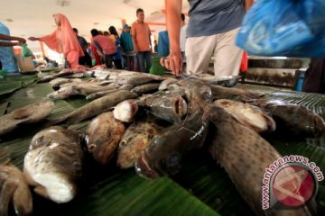 Gelombang tinggi hasil tangkapan nelayan Langsa turun
