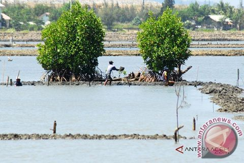 Aceh Barat akan buka tiga hektare tambak