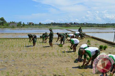 Petani Aceh Barat sepakat turun sawah serentak