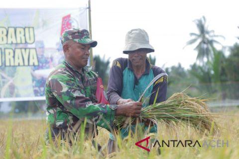 Kodim Nagan Raya panen perdana bersama petani