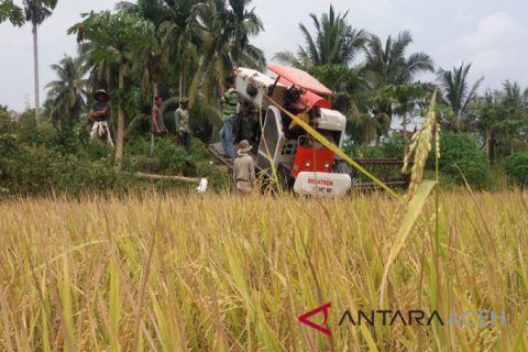 Kades tewas dibacok di Aceh Utara