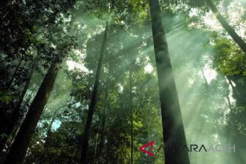 Pemko Langsa menang dalam sengketa hutan lindung