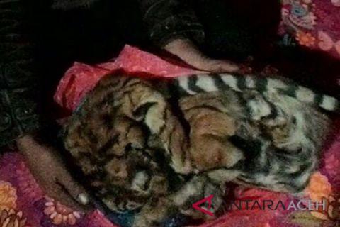 Penjual kulit harimau ditangkap di Aceh Tengah