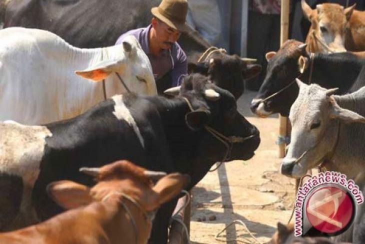 Aceh Tengah targetkan 2017 populasi sapi meningkat