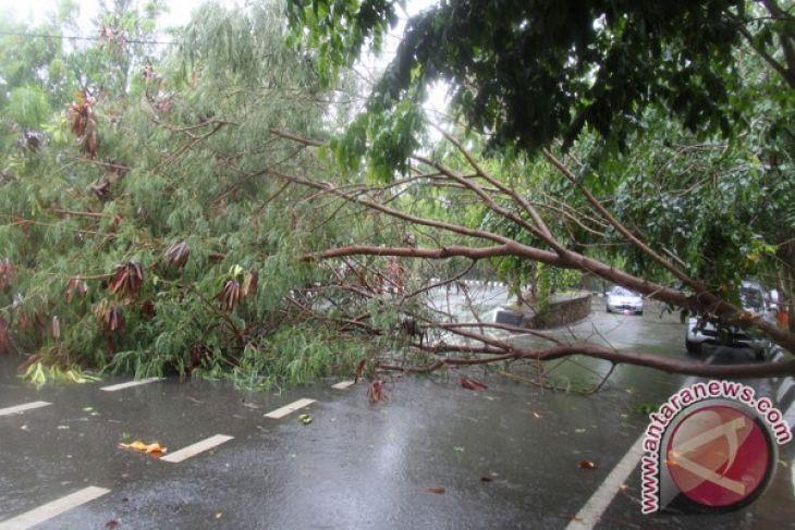 Satu warga meninggal tertimpa pohon tumbang