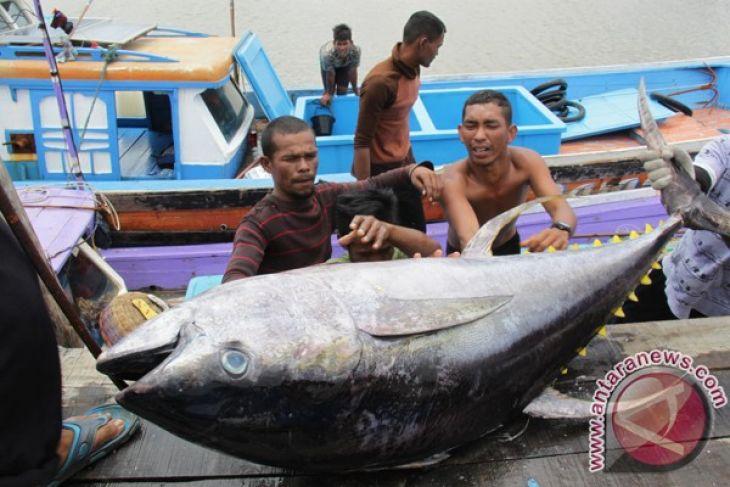 Nilai ekspor ikan Aceh meningkat 1.035 persen