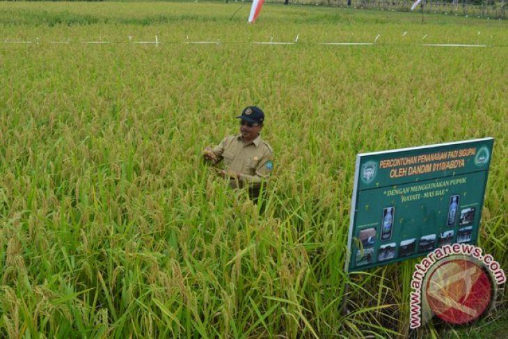 Kabupaten Abdya kembangkan varietas padi M400