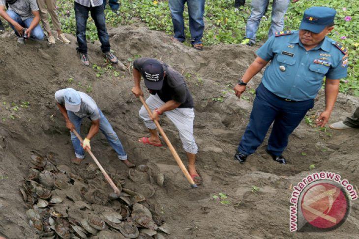 Hewan selundupan tangkapan Lanal Lhokseumawe dimusnahkan