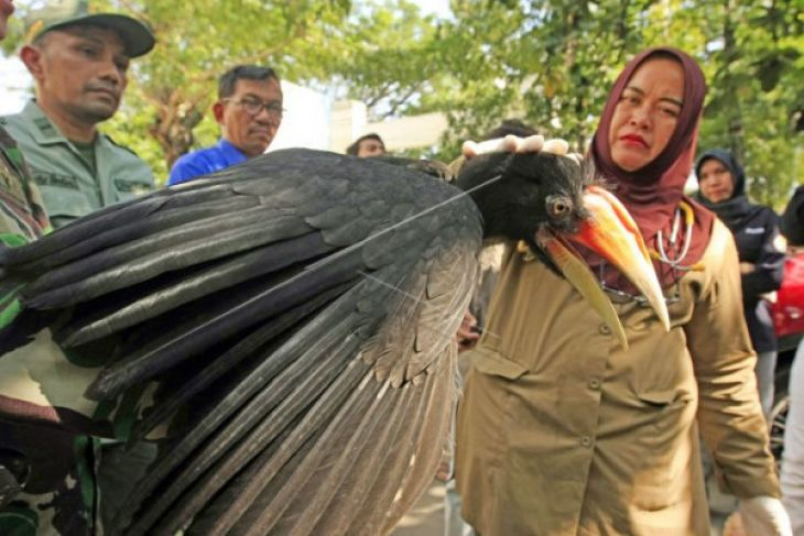 BKSDA Terima Burung Rangkong