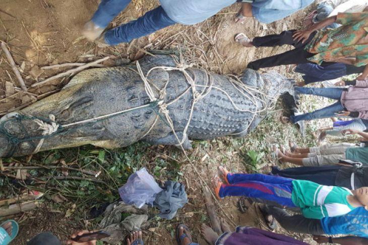 Warga Aceh Timur tangkap buaya