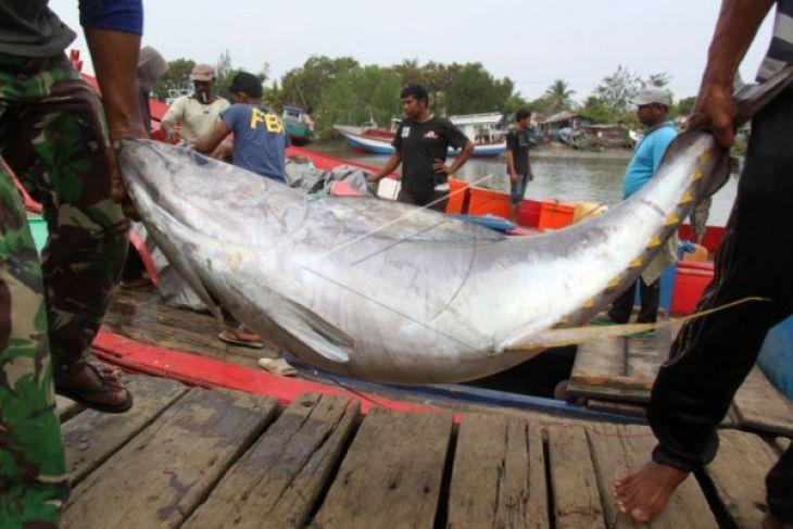 Exspor Tuna Dari Aceh