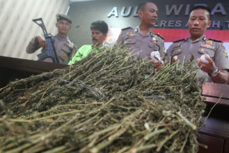 Polisi Tangkap Pengedar Ganja Aceh