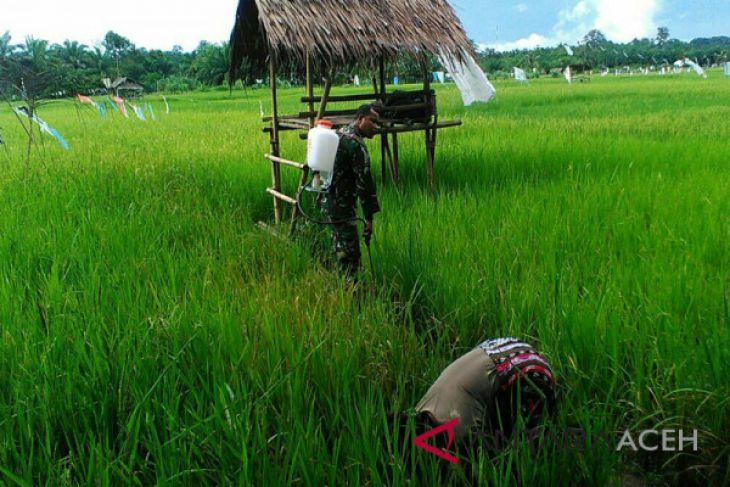 Pemkab Aceh Barat fokus bangun sektor pertanian