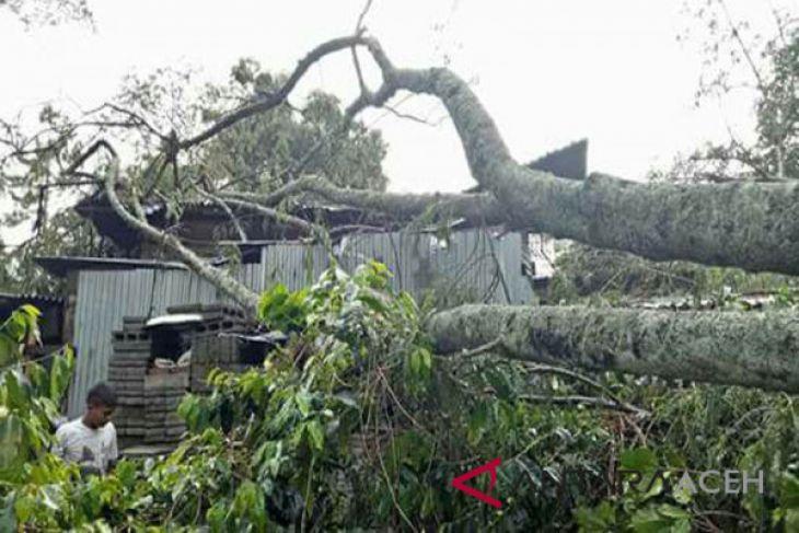 Puting beliung tumbangkan pohon di Sabang