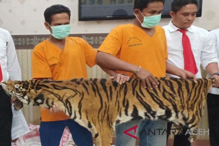 Polres Aceh Selatan tangkap penjual kulit harimau