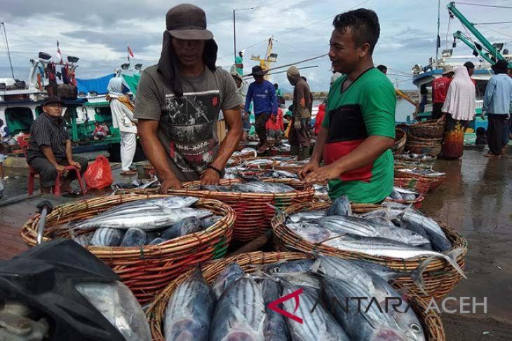 Ikan cakalang dominasi tangkapan nelayan Aceh