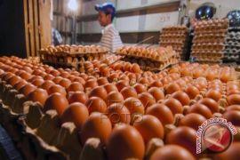 Harga telur di Ternate turun