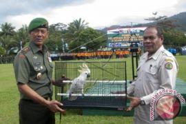 BKSDA Maluku amankan satwa dilindungi