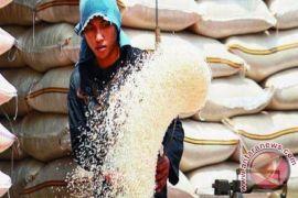 Stok beras Maluku Tengah aman