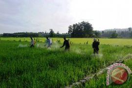 Pemprov Maluku Utara akan kembangkan sistem pertanian