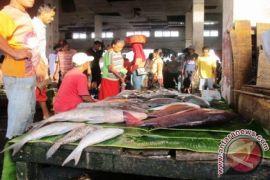 Tuna besar di Ternate kosong