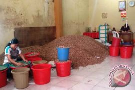 Harga biji pala di Ternate turun