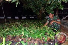 BKSDA: masyarakat MTB usulkan pohon torem dilindungi