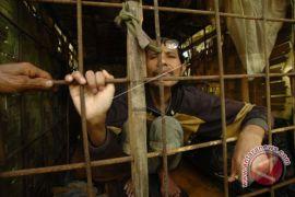 Dinkes Ternate maksimalkan penanganan penderita gangguan jiwa