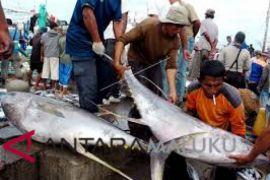 Ekspor Maluku Januari 2018 turun