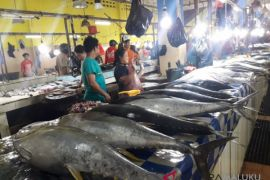 Harga cakalang dan tuna di Ternate naik