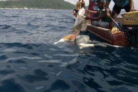 Polisi selidiki temuan mayat di perairan Kayoa
