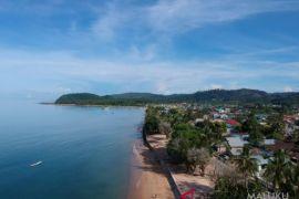 Kepulauan Sula dijadikan sentra pengembangan jambu mete